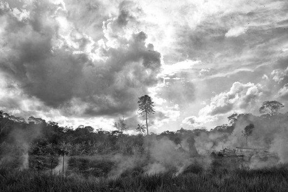 Foto di pino ninfa